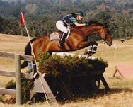 "Elizabeth and ""Top Drawer"" compete  at the Area VI Preliminary Level Championships in Woodside, California in 1994."